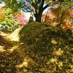 松原公園の紅葉