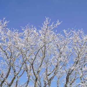 鶴見岳の樹氷