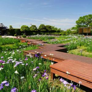 一日遅れの速報…佐賀大和中央花しょうぶ園