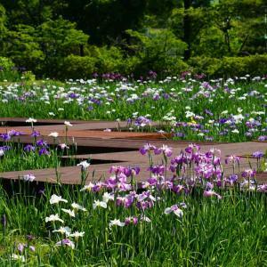 佐賀大和中央花しょうぶ園