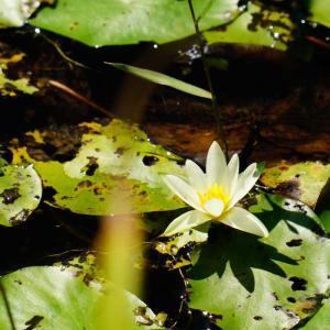 お盆休み…樫原湿原