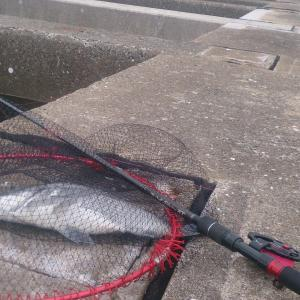 一旦チヌ釣りで博多沖防