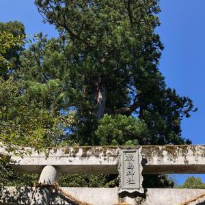 「青い池」山口・別府弁財天池に行って来ました。