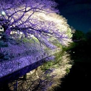 「福岡城さくらまつり」に行って来ました。