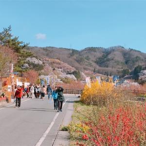 花見山に行ってきました!