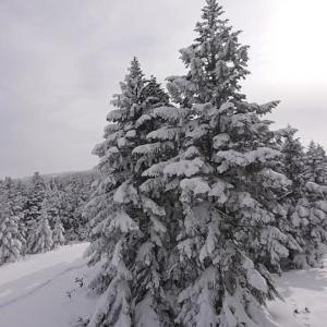 スキー場の1日♪