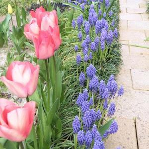 4月のMy Garden&ちびエル