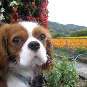 紫陽花とちびエル