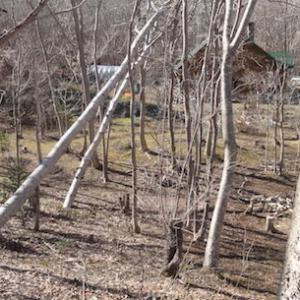 伐採のシーズンが始まった