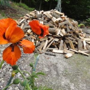 『薪』にケシの花は関係なかったかな