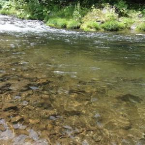 渓流釣り・鳥崎川2020
