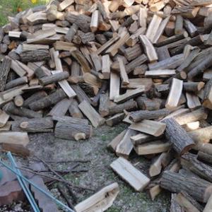 「薪」にたくさんの『カビ』がはえてきた