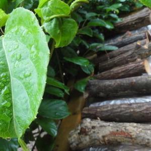 「薪のカビ」は期限切れの特効薬を
