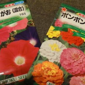 のんびりと「花の苗」づくり