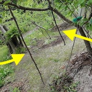 アンズの木に鎌首をもたげるのは