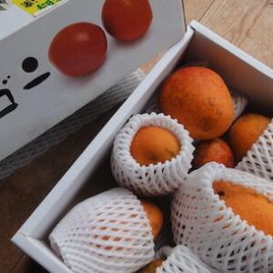 マンゴーの季節はしばらく続いてほしい