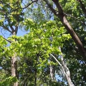 木の声を聴くーー無言こそ無限の言葉を含んでいる