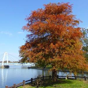 いつもの公園の秋色