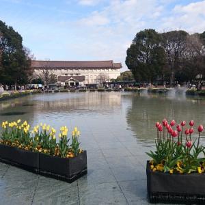上野公園のアイスチューリップ