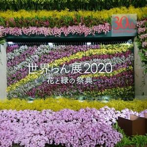 世界らん展2020~ディスプレイ部門
