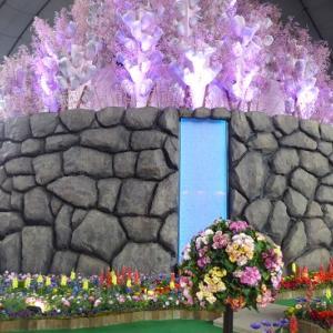 世界らん展2020~シンボル桜蘭と日本大賞