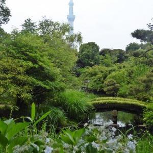 向島百花園de紫陽花とスカイツリー