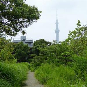 向島百花園de緑とスカイツリー