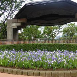 日比谷公園de桔梗とフヨウとシュウメイギク