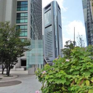 高層ビルとフヨウの花