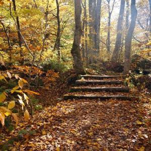 恋しい秋の山ガール旅【奥入瀬渓流を歩く】