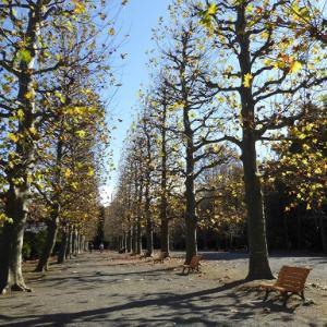 晩秋の新宿御苑~プラタナス並木と秋薔薇