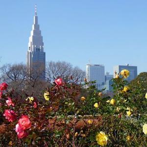 新宿御苑の薔薇とブラタナス並木