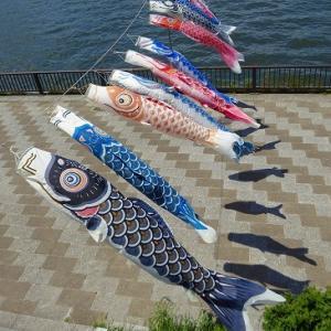隅田川沿いに泳ぐ鯉のぼり