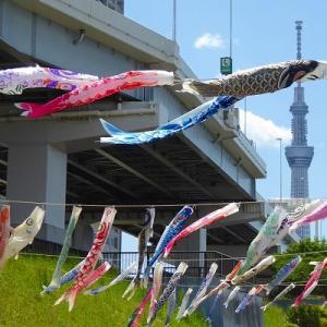 隅田川沿いのスカイツリーと鯉のぼり