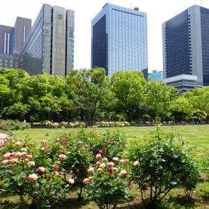 バラ満開の日比谷公園第二花壇で