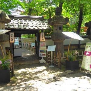 上野東照宮ぼたん苑の春ぼたん