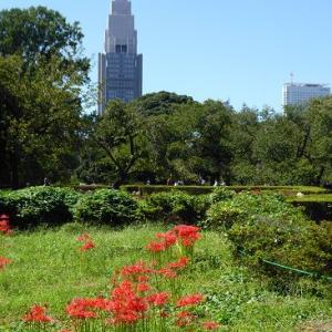 新宿御苑de彼岸花の紅と白