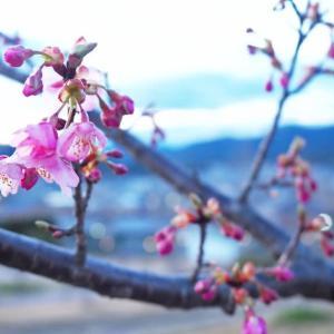 春の香り・・・。