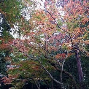 奈良盆地の紅葉