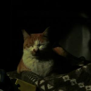 占い師と猫・21