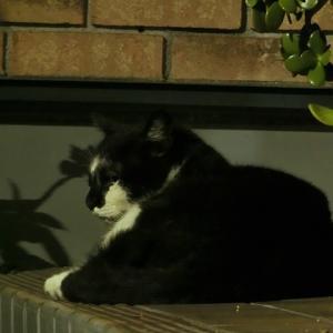 占い師と猫・23