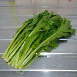 小松菜が高いので..... 「 わさび菜 」