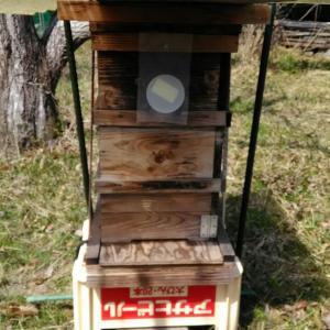 ニホンミツバチの誘引剤をセットしました。