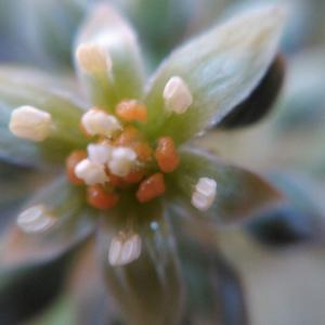 アボカドの栽培...人工受粉に挑戦