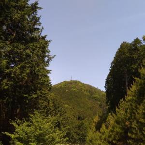 鎮守の森(?)に登ってきました。