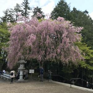 ゴールデンウイークの京都の旅3
