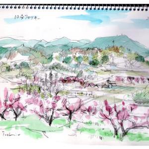 桃の満開と、桜の満開の時期。