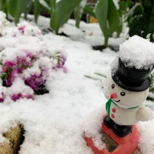 春の雪と外出自粛。家での過ごし方は「花の手入れ」と「けん玉」