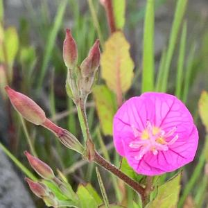 春の散歩で出会う雑草の花たちに癒やされた。