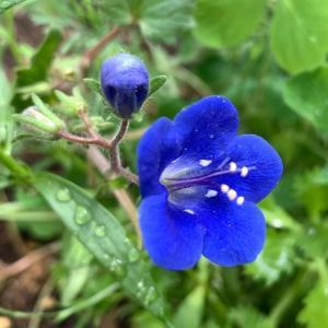 まくだけで手間いらず、庭が色鮮やかになるワイルドフラワー
